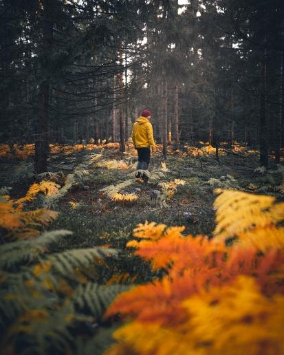 4+1 důvod, proč jsou Brdy na podzim nejkrásnější